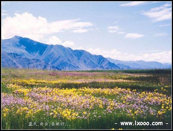 西藏拉萨南部地区的野花地