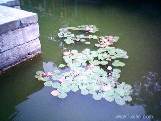 颐和园的小荷塘