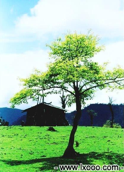 高山草场上的木屋 @ 四川雅安硗碛彭措