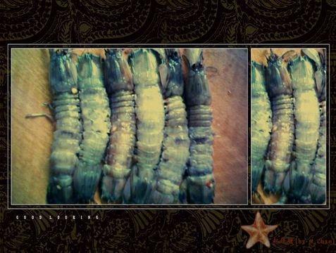 这可不是年饭吃的,不过是我最爱:咸虾蛄。(生腌的,下饭下粥的最佳食品)