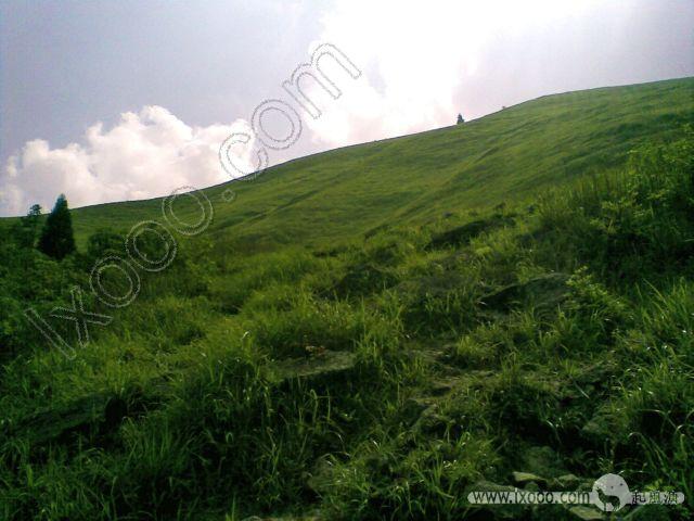 九龙山顶的高山草甸