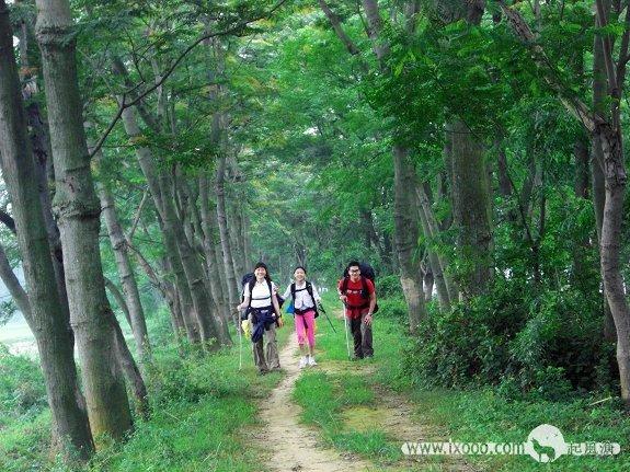 徒步漓江,穿过树林