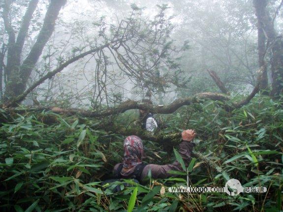 林中的路是艰难的