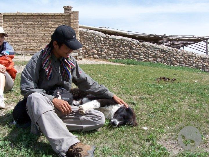 河童与牧羊犬