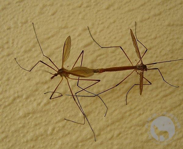 户外防蚊方法