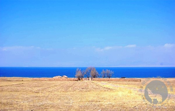青海湖边的油菜花农场
