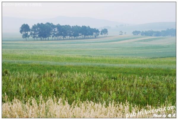 丰宁坝上草原 照片