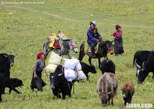 西藏迁徙中的牧民特写