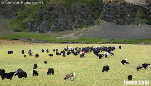 西藏牧民迁徙中的场景