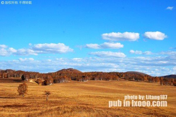 坝上草原边缘树林上空的蓝天白云