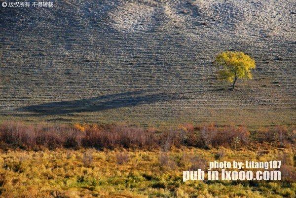 坝上草原 树 影子 照片
