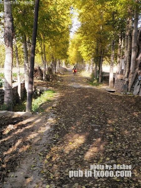 树荫夹道·金黄的树叶和斑驳的透过树叶的太阳光斑·青海湖