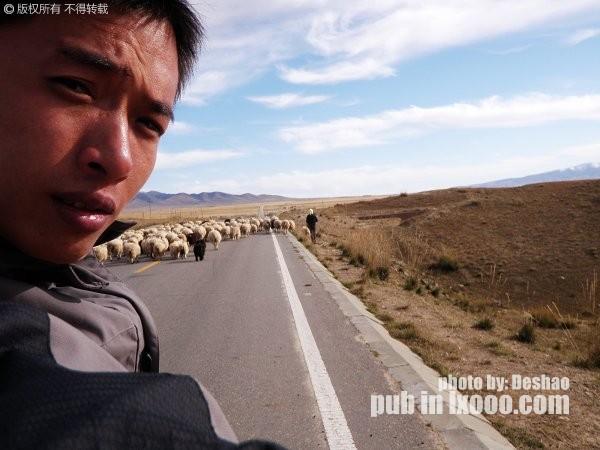 与羊群合影·青海湖