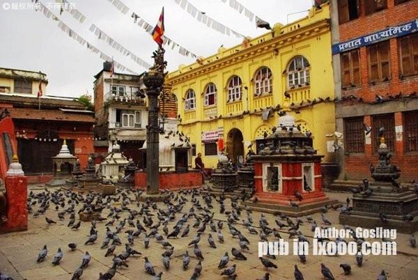 神庙间超生的鸽子