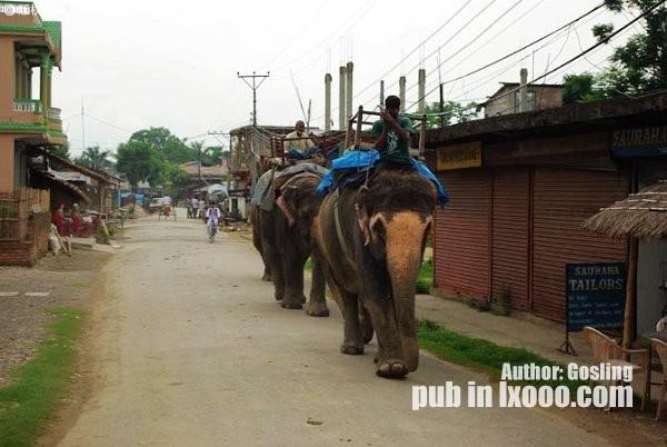 尼泊尔奇特旺街上路过的大象