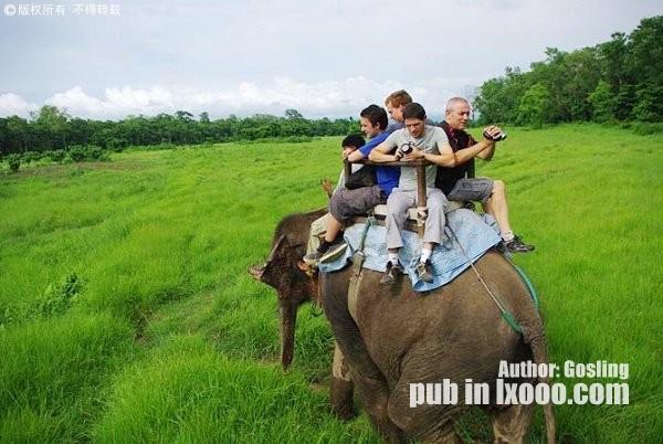 在Jungle乘坐大象