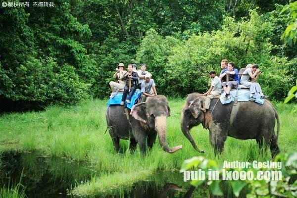 在尼泊尔Jungle,我们乘坐大象到郊外看野生动物