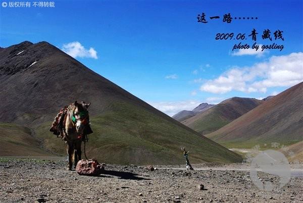青藏铁路边站立的马匹