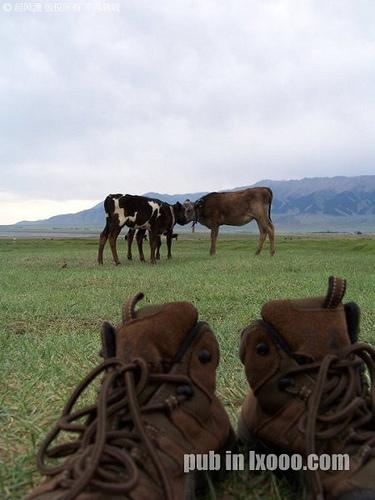AM8H13M,河童的鞋子与两头牧牛@巴里坤湖畔