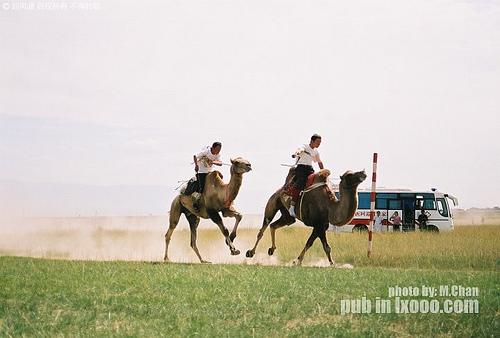 巴里坤湖畔的赛骆驼@新疆 哈密地区