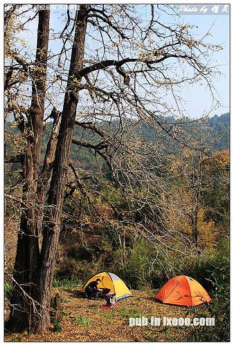 在尤溪古银杏树下露营