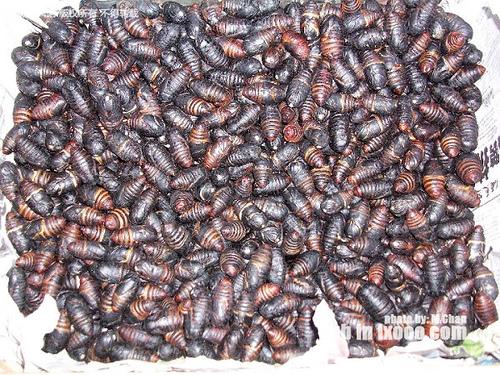 山河杂货店里出售的森林蚕蛹