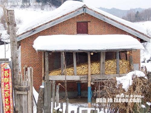 留着过冬的苞谷棒(玉米)@东升农场 雪乡
