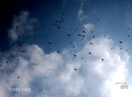 船底顶上空飞过的群鸟 photo by 阿乐