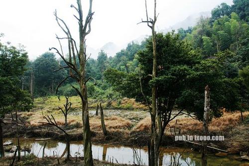 峡洞的枯树·船底顶