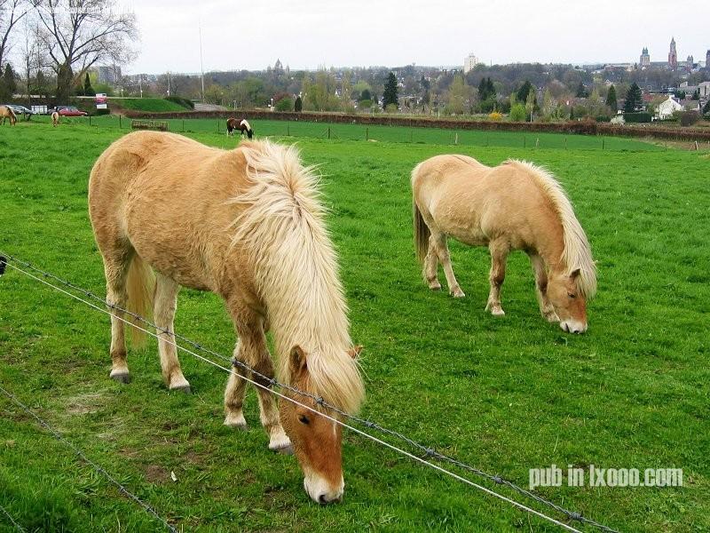马驹 照片