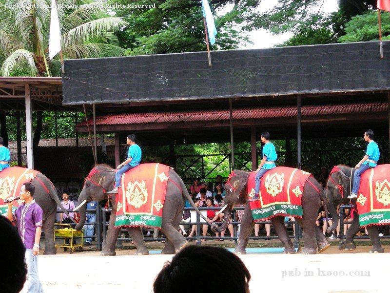泰国 大象