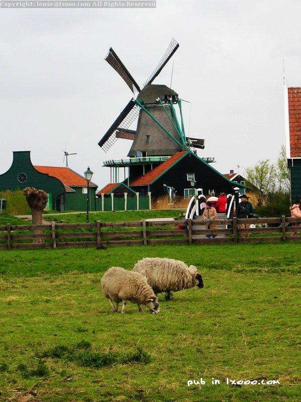 赞斯堡(赞斯安斯)的牧场及风车