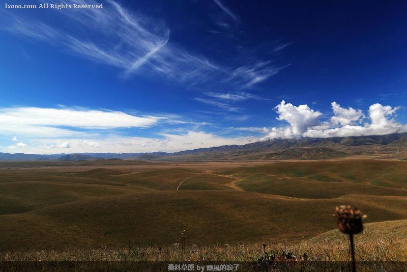 宽广的桑科草原