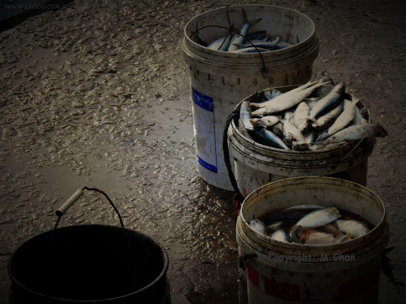 汕尾市城区水产品批发市场码头上的三桶青鱼