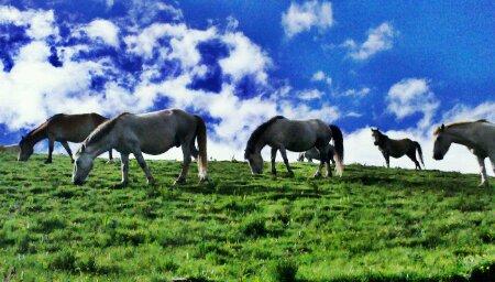 国道318川藏线上的牧马