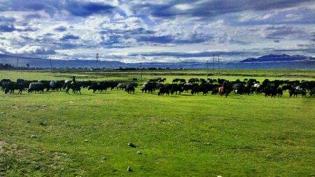 毛垭草原上迁徙的牧民